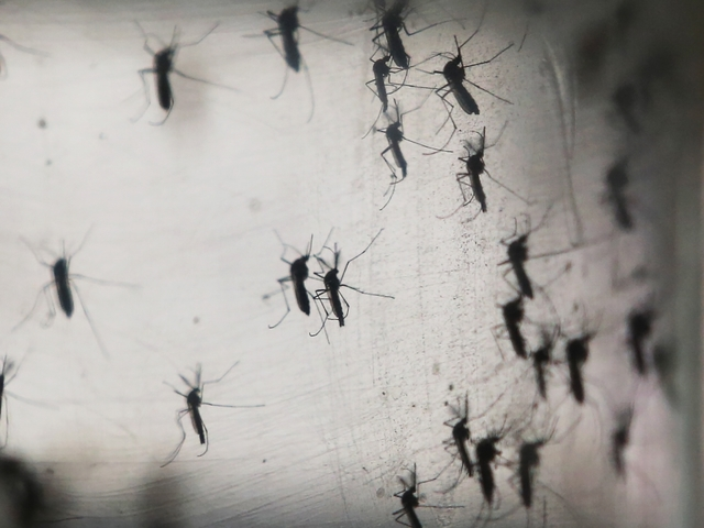 Fight the Bite: 24/7 Hotline for Zika Questions