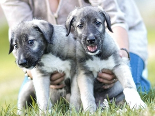 First documented identical twin puppies born