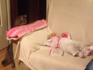 Curious cat absolutely fascinated with baby