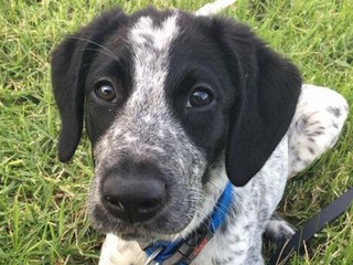 Trainee bomb detector puppy shot dead