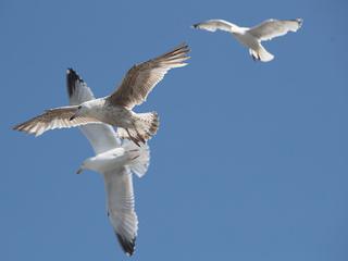 Naked man chasing seagulls arrested at MI park