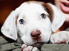 Brewery offering paid leave for puppies