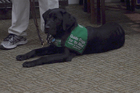 Fraudulent service animals laws lacking