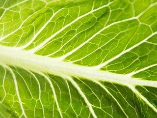 CDC: E. coli outbreak linked to romaine lettuce