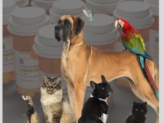 FDA warns of owners using pets to get opioids